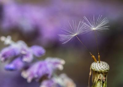 Springtime Mindfulness Through Lent